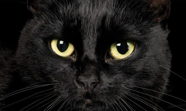 Sognare un gatto nero