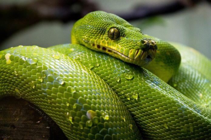 serpente nei sogni