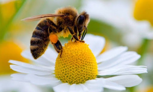 Sognare le api: guida completa