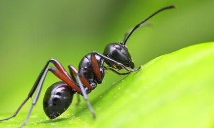 Perchè capita di sognare formiche?
