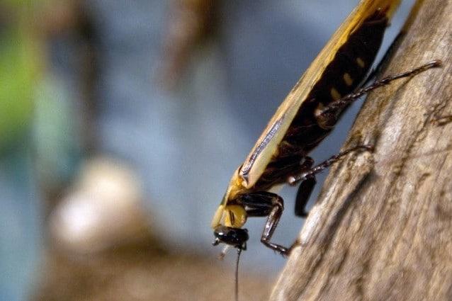 Sognare scarafaggi che significato ha?