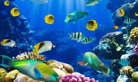 Cosa significa sognare pesci?