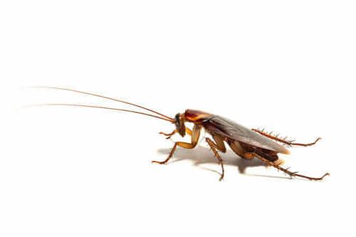 sognare scarafaggi