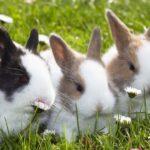 Sognare conigli: significati e interpretazioni